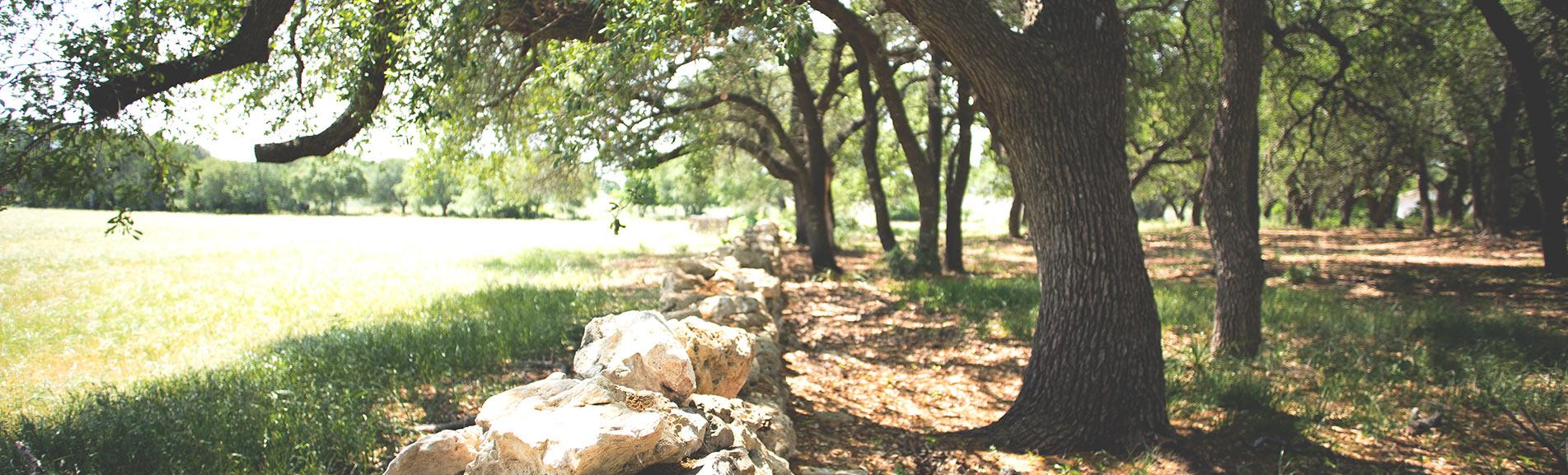 RV Park & Campground Dripping Springs, TX | Motorhome Park